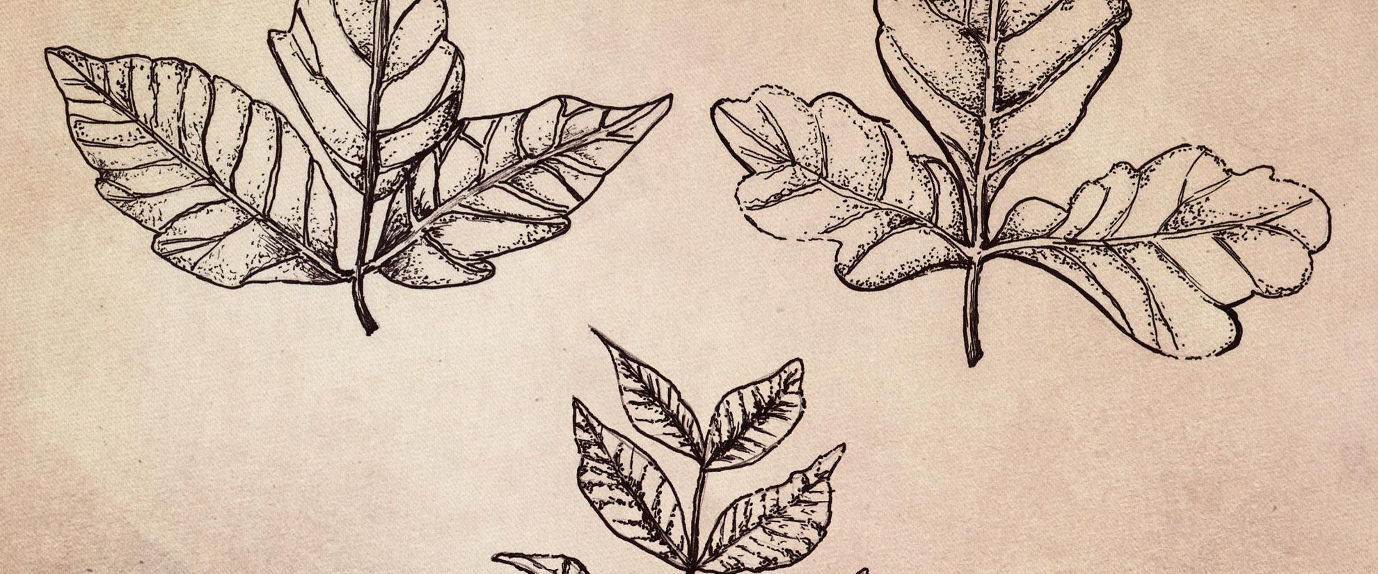 Recognizing Poisonous Plants